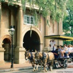 Horse and Buggy - Charleston, SC